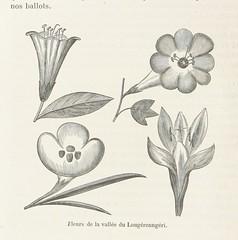 Image taken from page 52 of 'A travers l'Afrique. Voyage de Zanzibar à Benguela, traduit ... par Mme H. Loreau, etc. [With plates and a map.]'