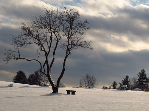 The Lone Winter Tree