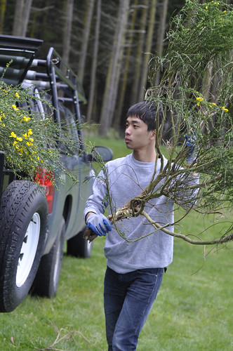 LeWen Chen, 17, from InterIm WILD loads Scotch Broom into a trailer to be removed from Fort Ebey State Park. (U.S. Forest Service/Erica Keene)