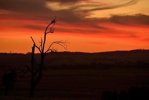 sunset australia newsouthwales aus woodville wedgetailedeagles paulhollins nikond610
