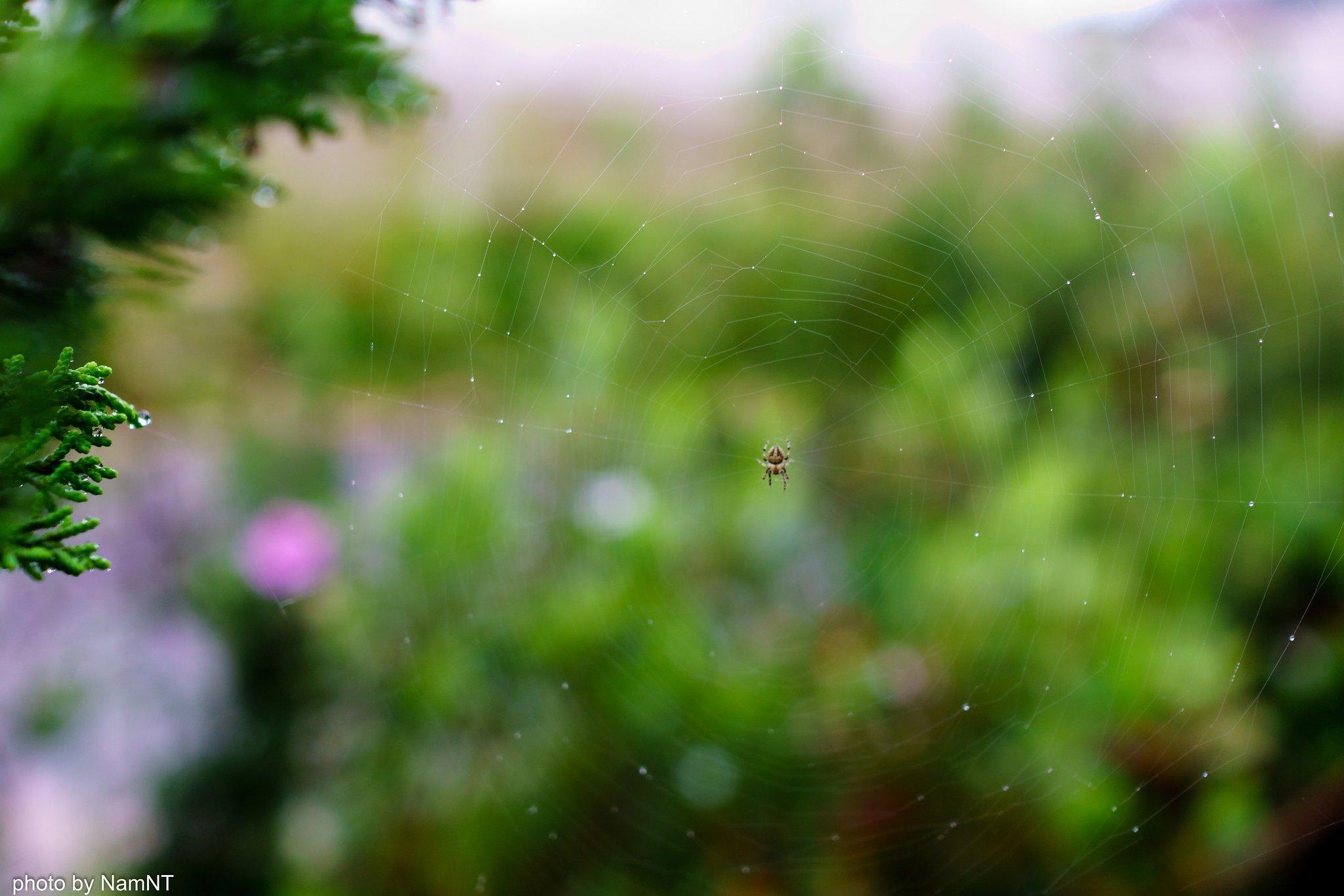 18926330013 73385dc8e4 k - [Phượt] - SG-Cổ Thạch- Nha Trang- Đà Lạt: ngàn dặm mua hạt é cho người thương