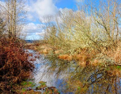 ebeyisland pond tree lichen reflection trinterphotos richtrinter