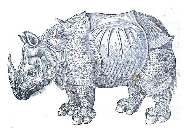 Animal-Rhinocerous-Durher1