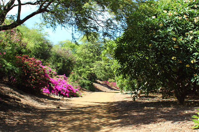 Koko Crater Botanical Garden Sweet Savory
