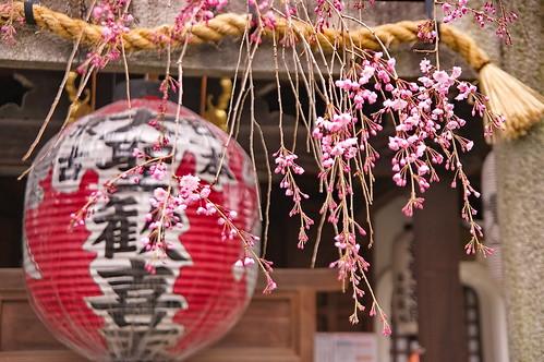 【写真】2013 桜 : 雨宝院/2021-09-19/IMGP9120