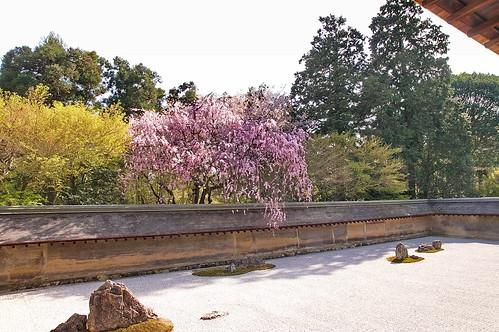 【写真】2013 桜 : 龍安寺/2020-01-22/IMGP9836