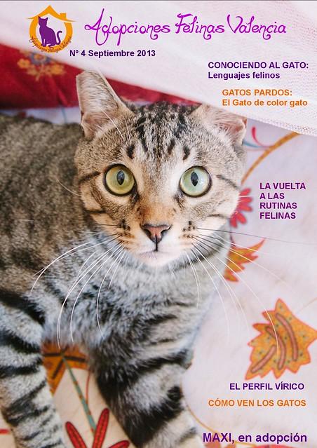 Revista nº 4 Septiembre 2013: Conociendo al gato. Gatos Pardos. 9665465888_159dda940b_z