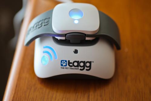 TAGG Pet Tracker-4.jpg