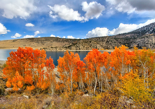 Orange Aspens at Grant Lake