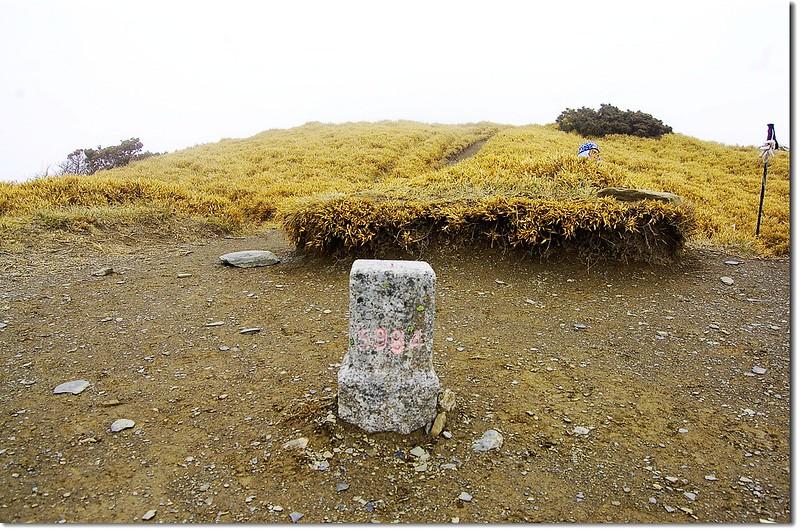 奇萊主山三等三角點(# 5984 Elev. 3560 m) 1