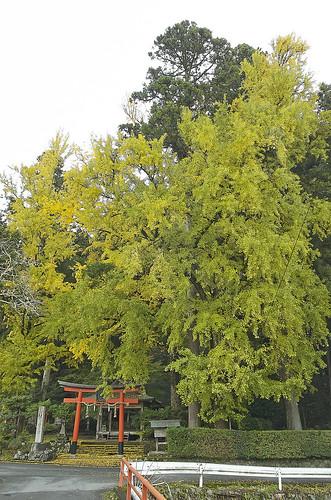 【写真】紅葉 : 岩戸落葉神社(2)