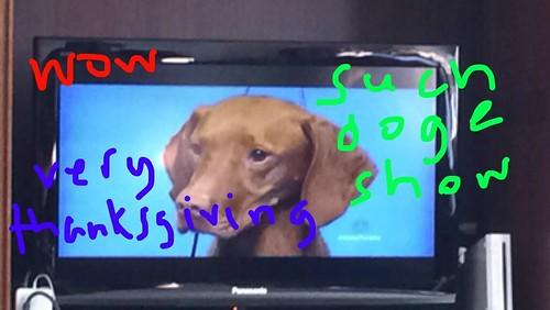 Snap Doge