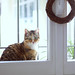Cat at the windows by Alis *avec Eva*