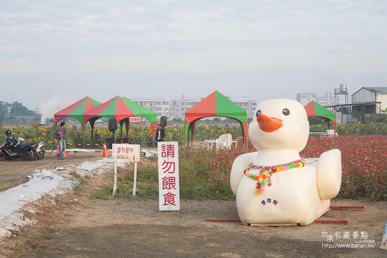 台南私藏景點-新市花海 (3)