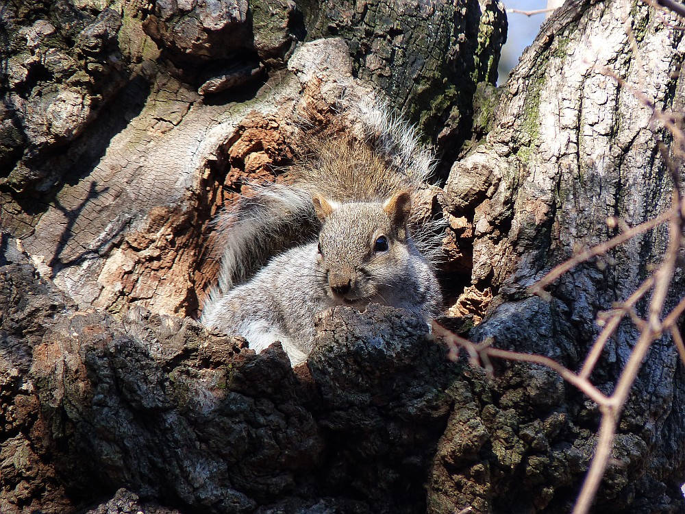 Squirrel at rest 1 27 13