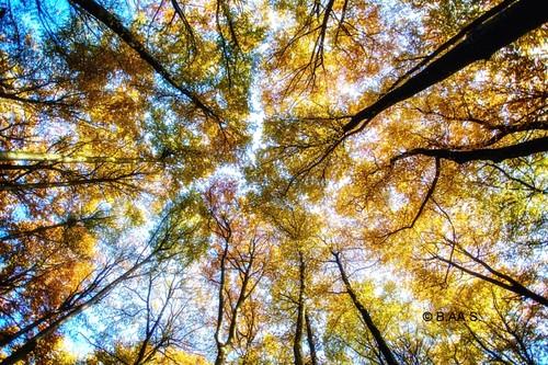 autumn trees tree nature colors norway canon norge colorful view natur lookingup autumncolors tre beech trær larvik vestfold colorimage bøkeskogen bøk autumnphotography
