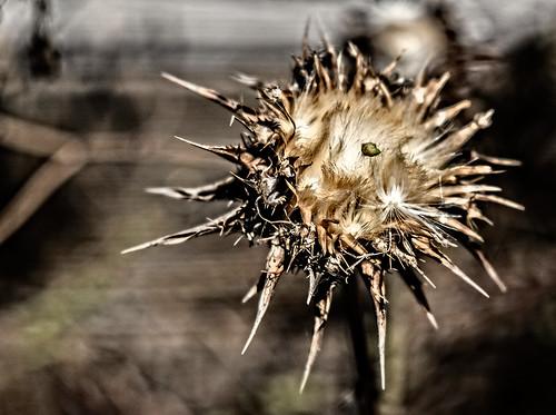 plant macro by joeeisner
