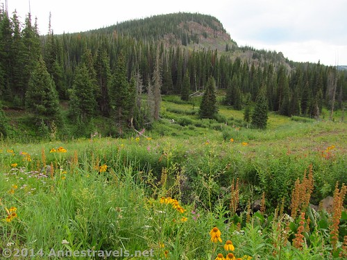 Looking back across the meadows from Sand Lake, Sand Creek Trail, Flat Tops Wilderness Area, Colorado