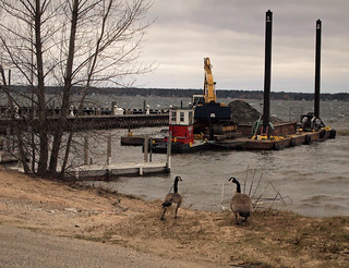 Geese and Dredge
