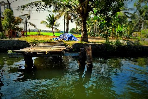 trees india lake nikon village kerala farms boatride allepey allapuzha punnamadalake d5300