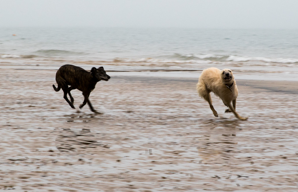 poppy and daisy on the beach - Click to show full size