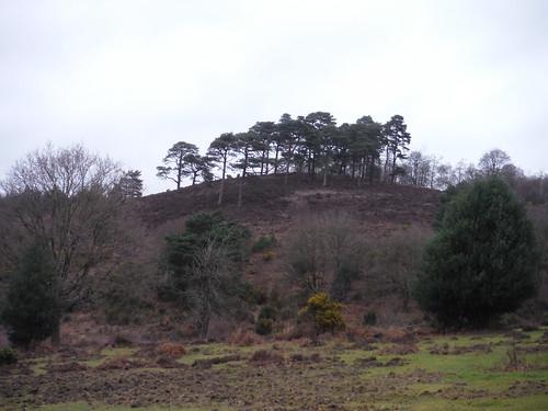 Highcomb Bottom, Viewpoint