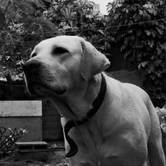 46/365 -  le bonjour du chien - 16-02-2017