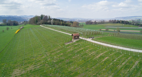 Drumlin südlich von Götighofen, Sulgen, April 2017
