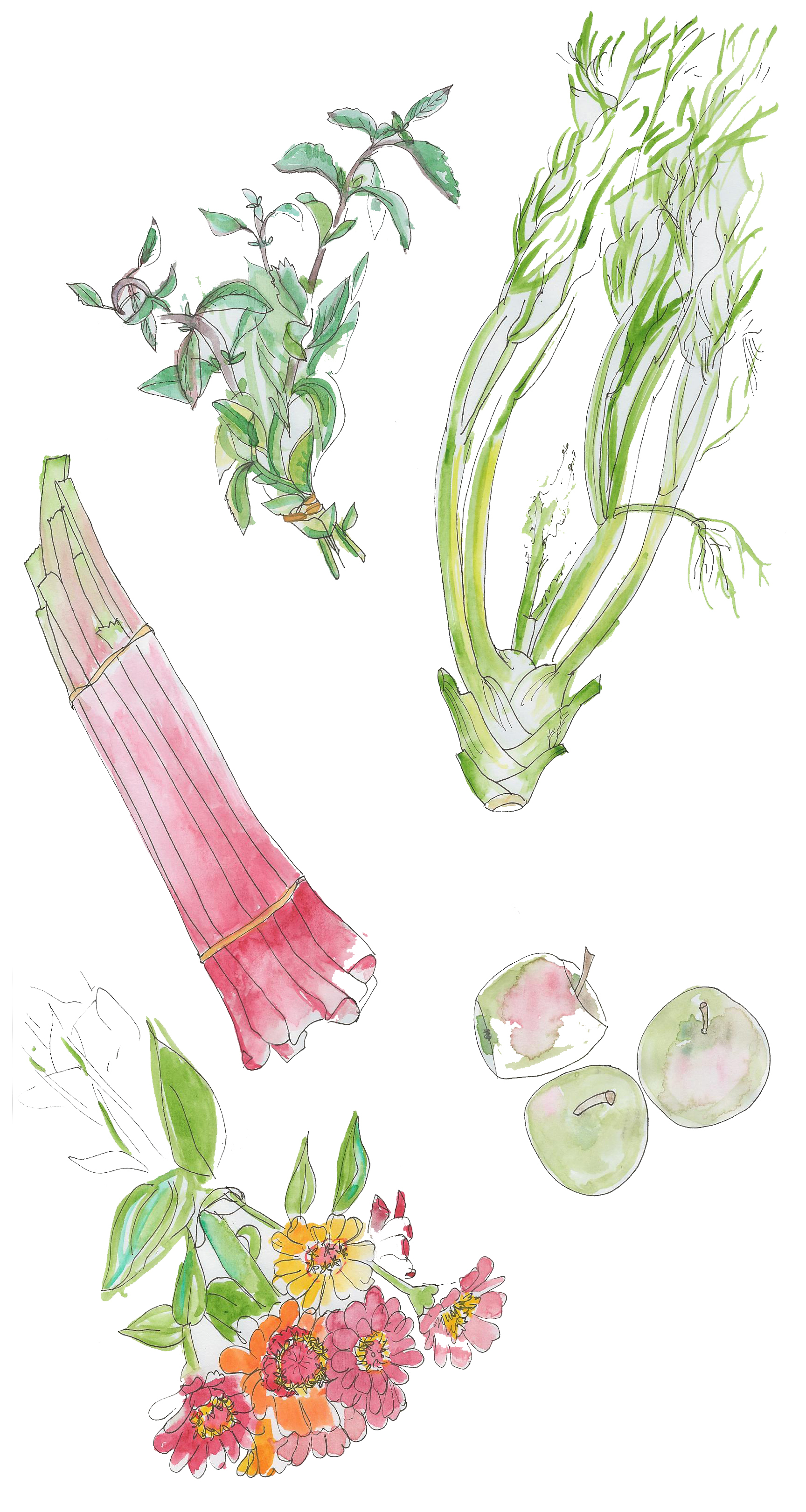 rhubarb-apples-fennel-bulb