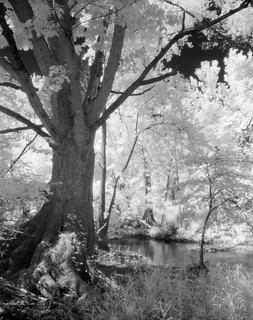 Along the Blanchard River in IR