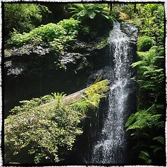 Redwood grotto waterfall in Mendo.