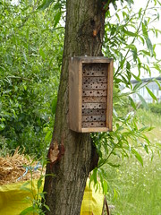 Greenwich Ecology Park - Insect home