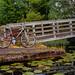 Rowing on the Arboretum by Sal Celis