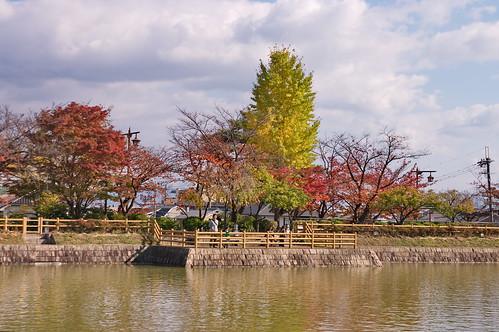【写真】2012 紅葉 : 長岡天満宮/2020-10-09/IMGP6565