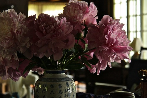 Peonies From the Garden 03
