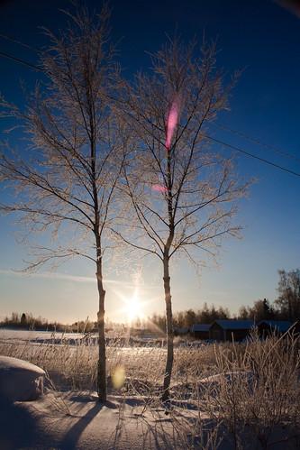 winter white snow backlight digital canon finland landscape frozen frost depthoffield lensflare dslr pure seaice midwinter lowsun vaasa driven saplings diamonddust cr2 25c raippaluodon 550d img7788 perfectblues canonrebelt2i