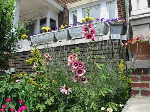 Streetscape Gardening Brooklyn Botanic Garden