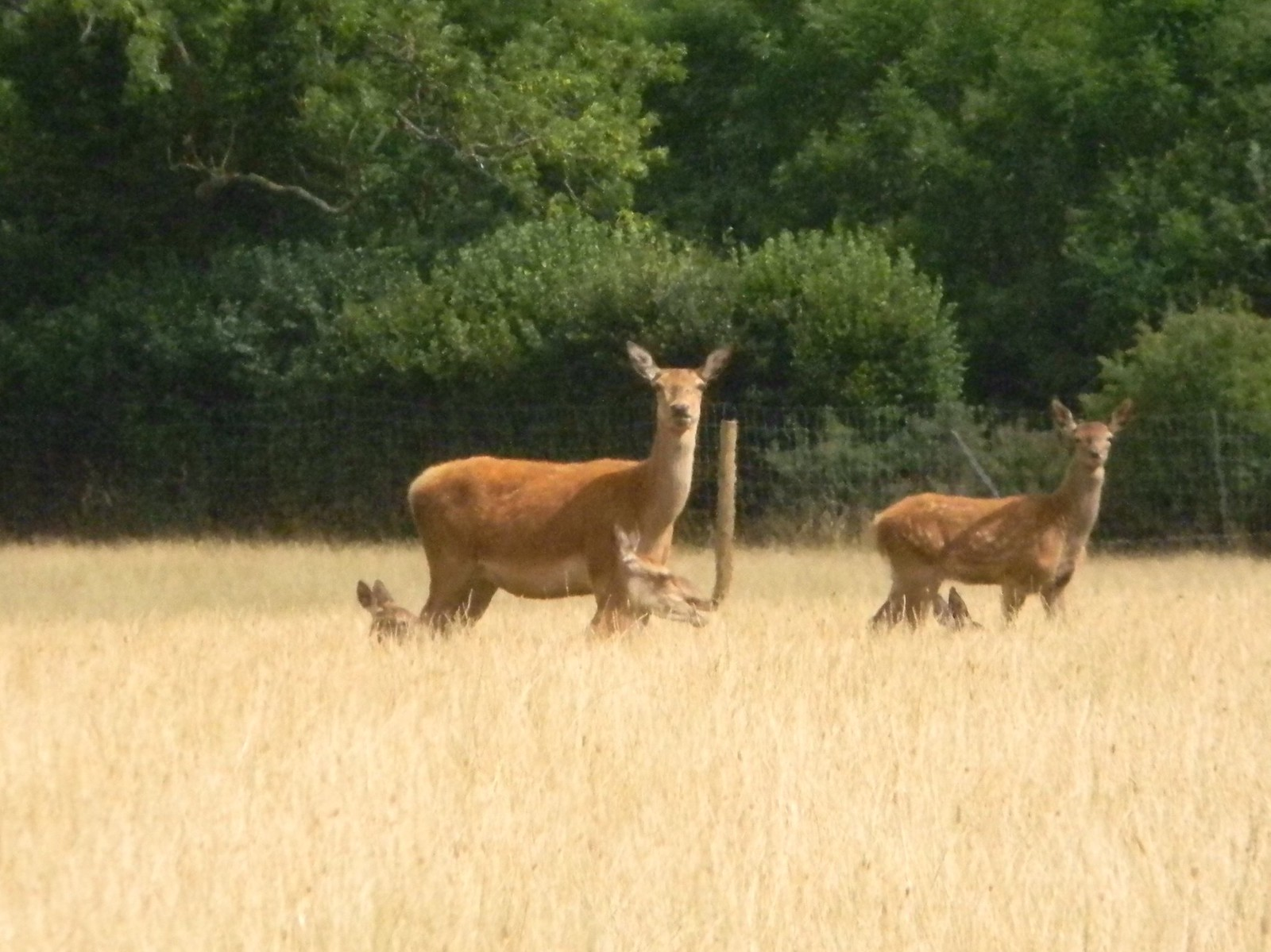 The Bledlow walk deer Saunderton Circular via Bledlow