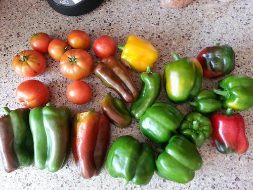 harvest 9-8