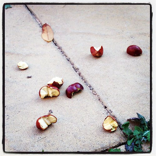 Conquered conkers #autumn