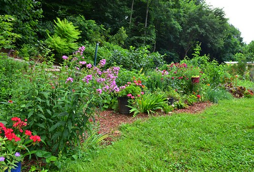 Image of conservation landscaping at a property in Montgomery County.