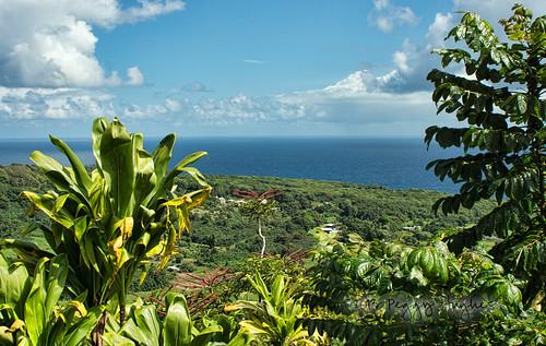 ocean blue trees sea sky plants seascape green nature beautiful clouds landscape hawaii view natural maui fresh clean hana hawaiian tropical lush peggy tropics roadtohana ©allrightsreserved ©peggyhughes