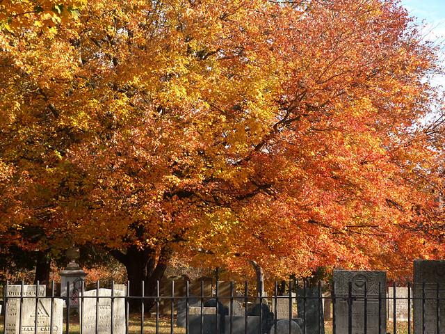 warren_cemeterytree