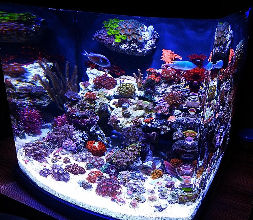 Got2envy 39 s kessil lit 28g jbj nano cube z 39 s p 39 s page 2 for Aquarium nano cube