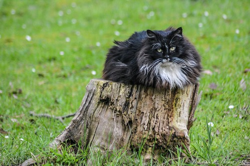 Toki on wood stump
