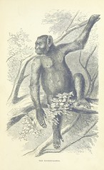 """British Library digitised image from page 347 of """"Explorations and adventures in Equatorial Africa; with accounts of the manners and customs of the people and of the chace of the gorilla, crocodile, leopard, elephant, hippopotamus and other animals. (Seco"""