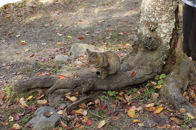 哲学の道で哲学する猫 その1