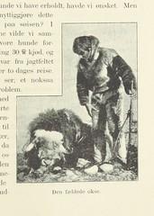 """British Library digitised image from page 223 of """"Blandt Nordpolens Naboer. Med Illustrationer af Th. Holmboe, etc"""""""