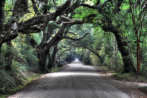 botanybay oaktrees edistoisland countryroads coveredroads