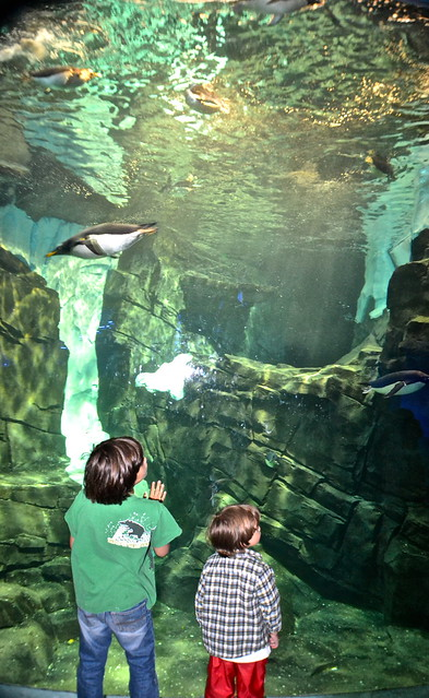 Sea World Orlando Florida - Penguins